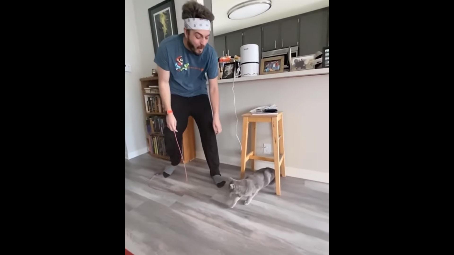 tadinho do gato