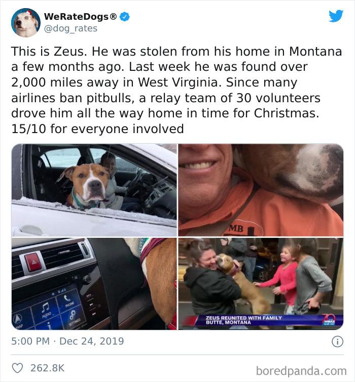 cachorro roubado