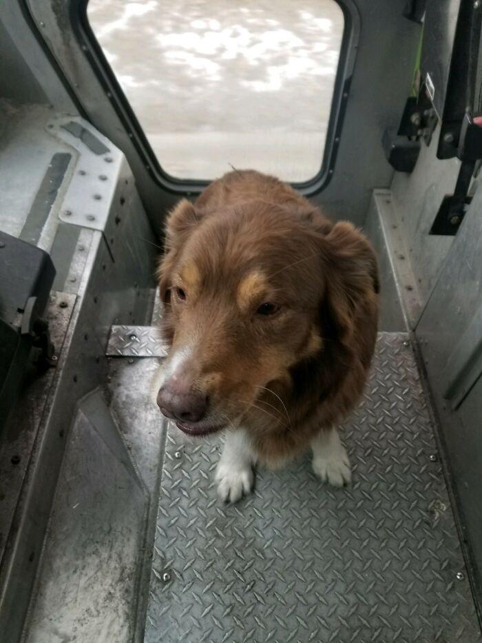cachorro que estava perdido