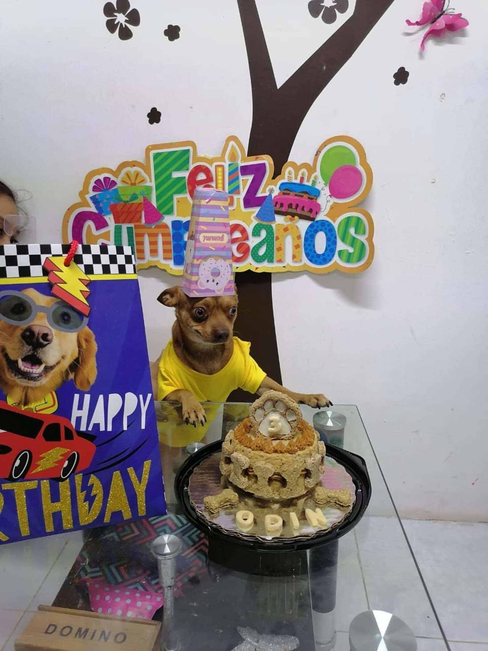 Cachorrinho-não-contémalegria-aniversário