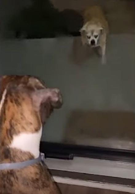 Cachorro ajuda irmão cego escada