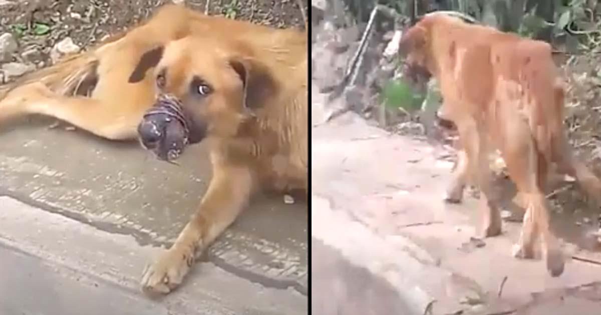 Cachorro com a boca amarrada matadouro