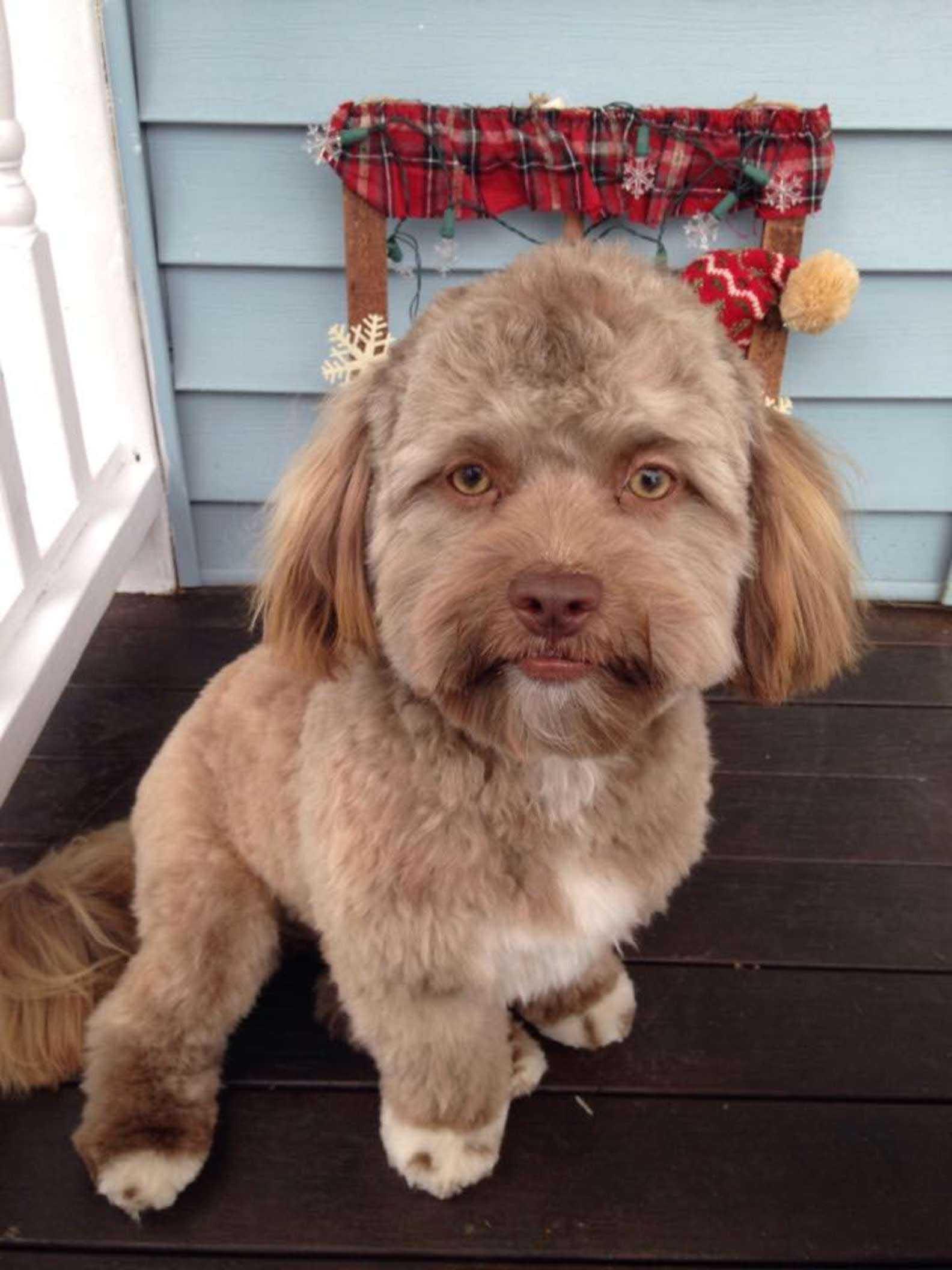 Cachorro com estranho rosto humano assustador