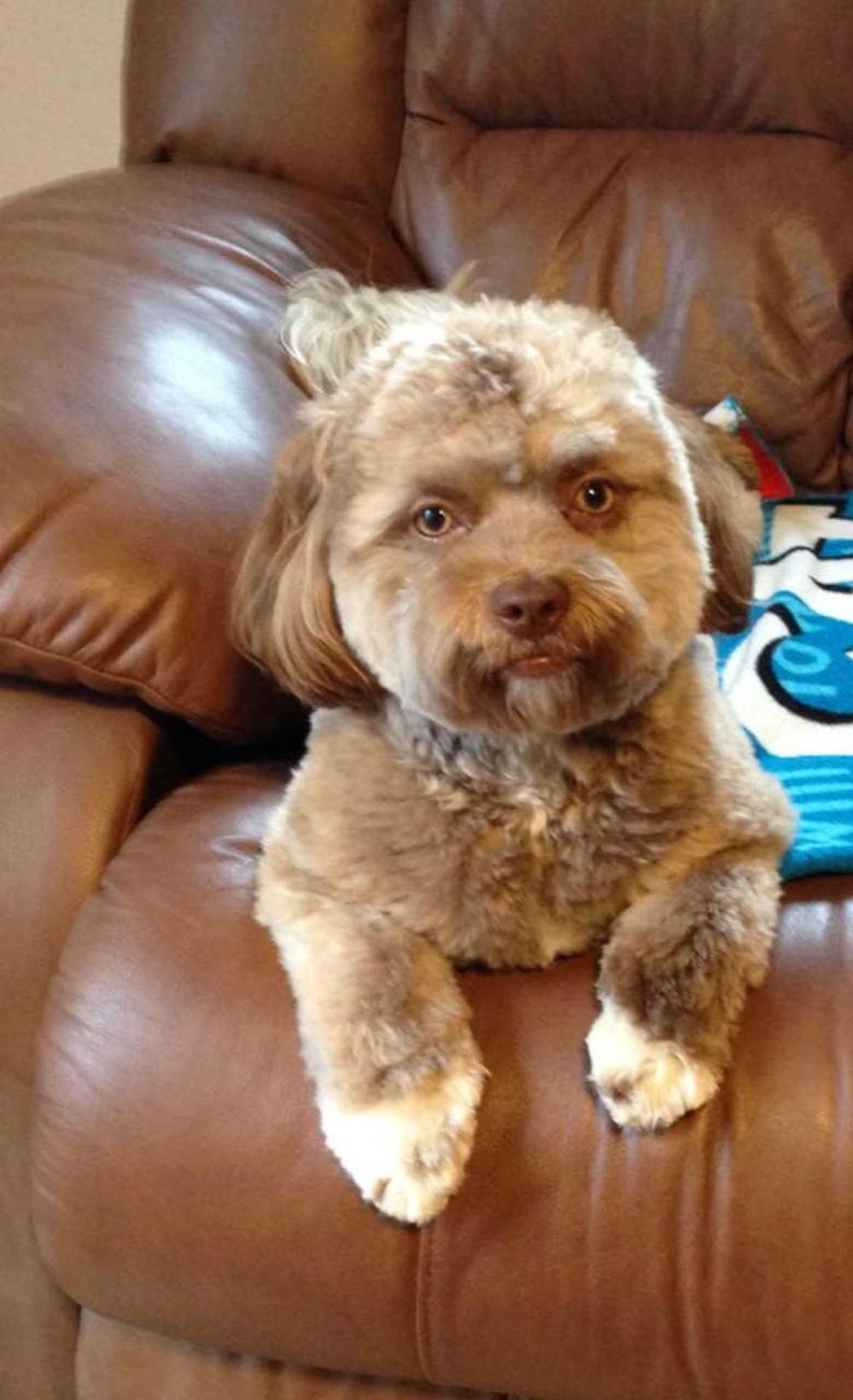 Cachorro com estranho rosto humano fotos