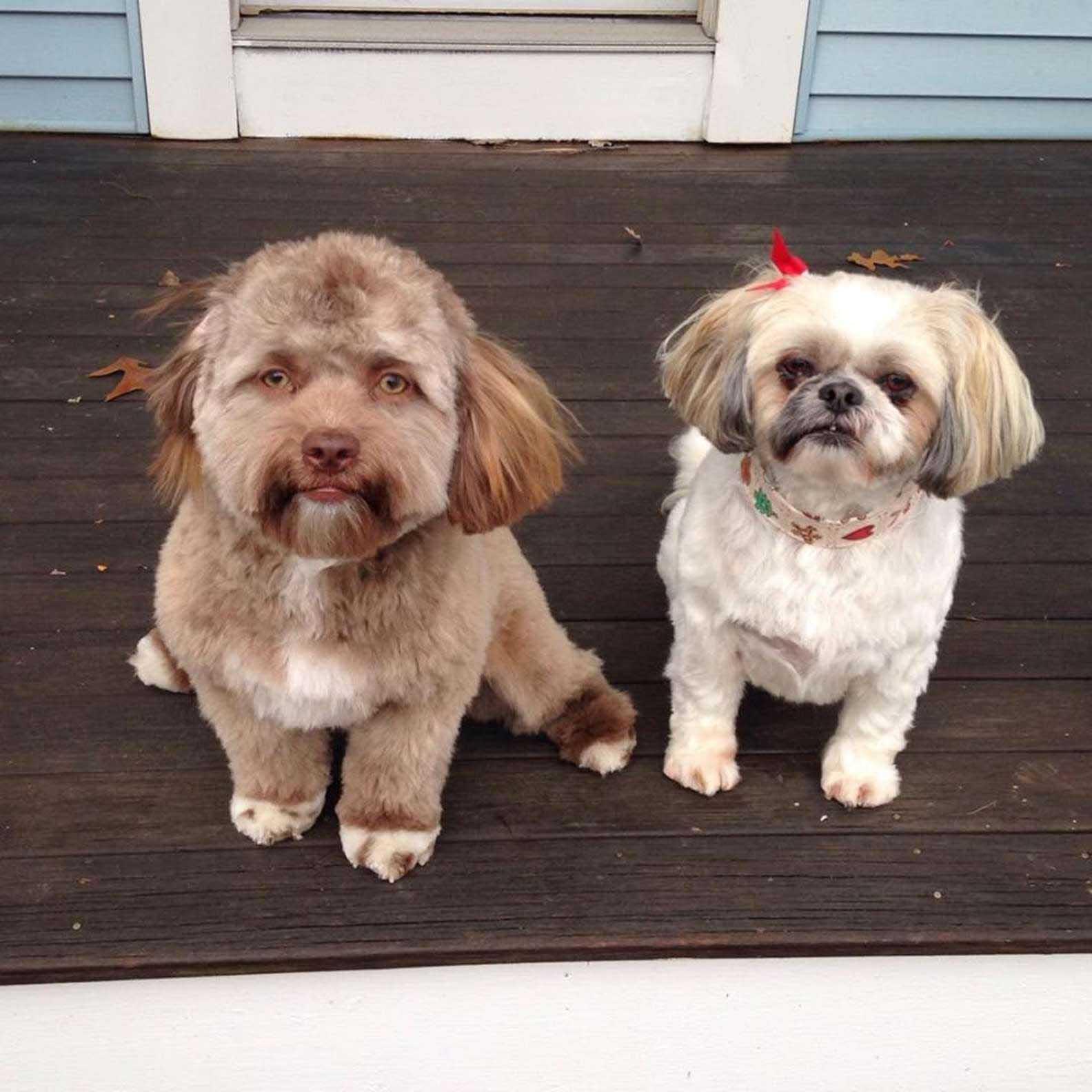 Cachorro com estranho rosto humano imagens