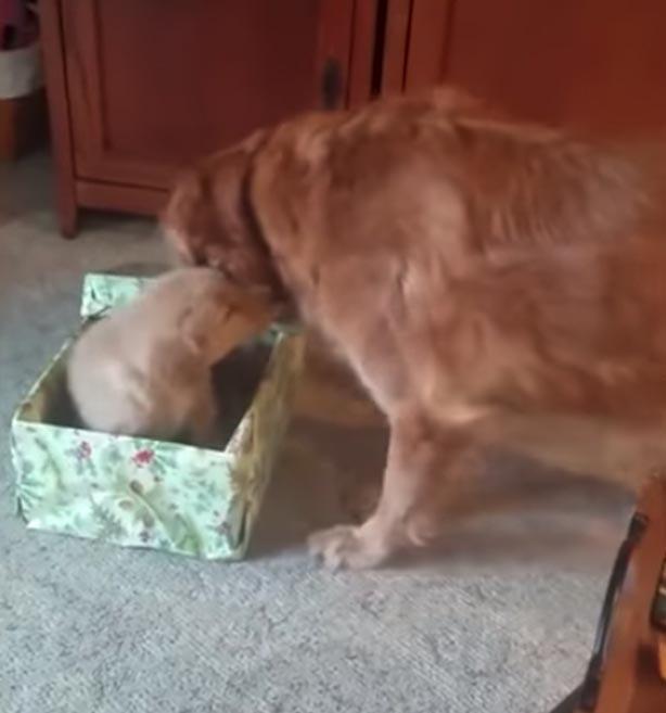Cachorro de luto ganha presente