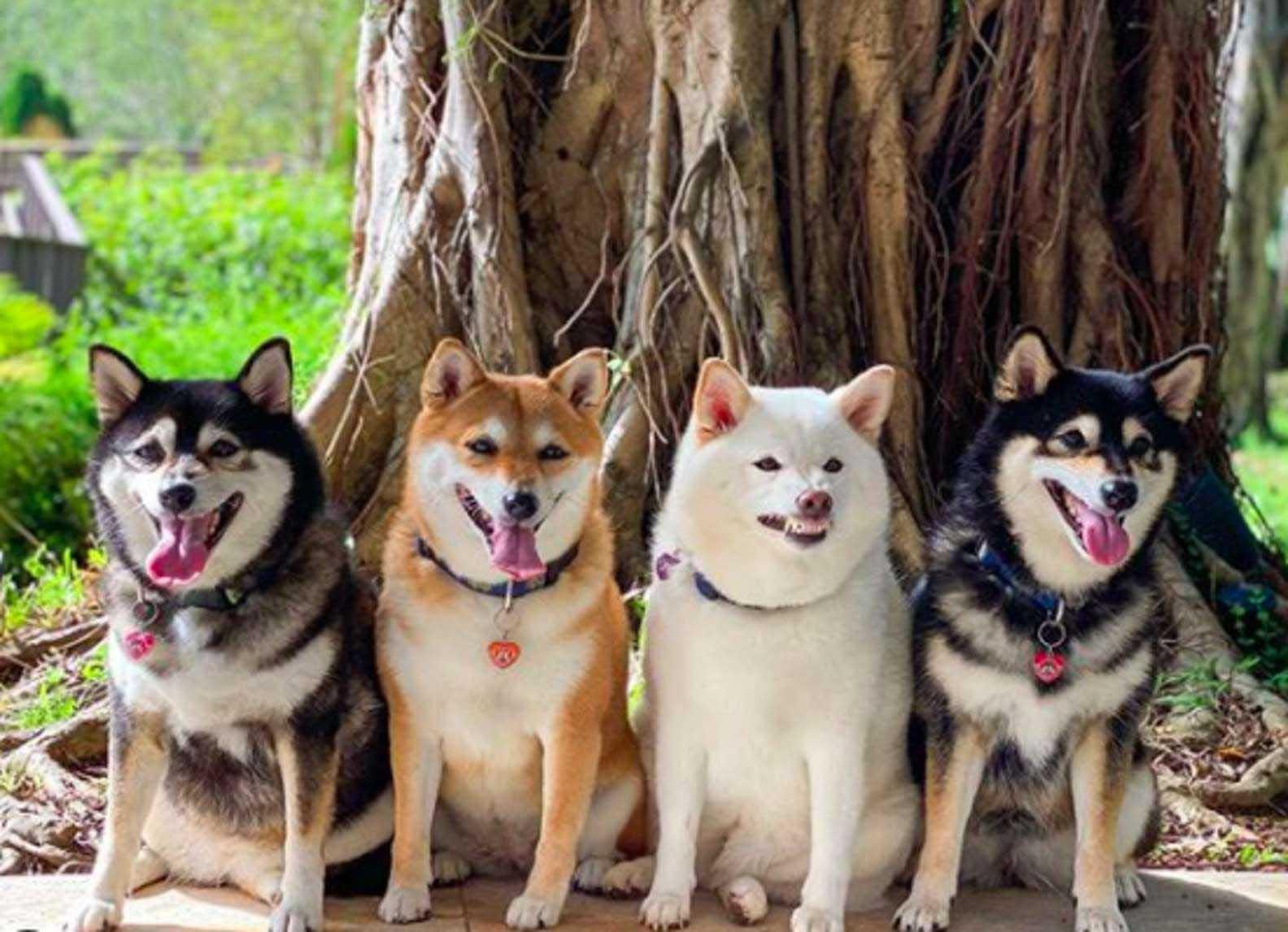 Cachorro estraga todas as fotos de família