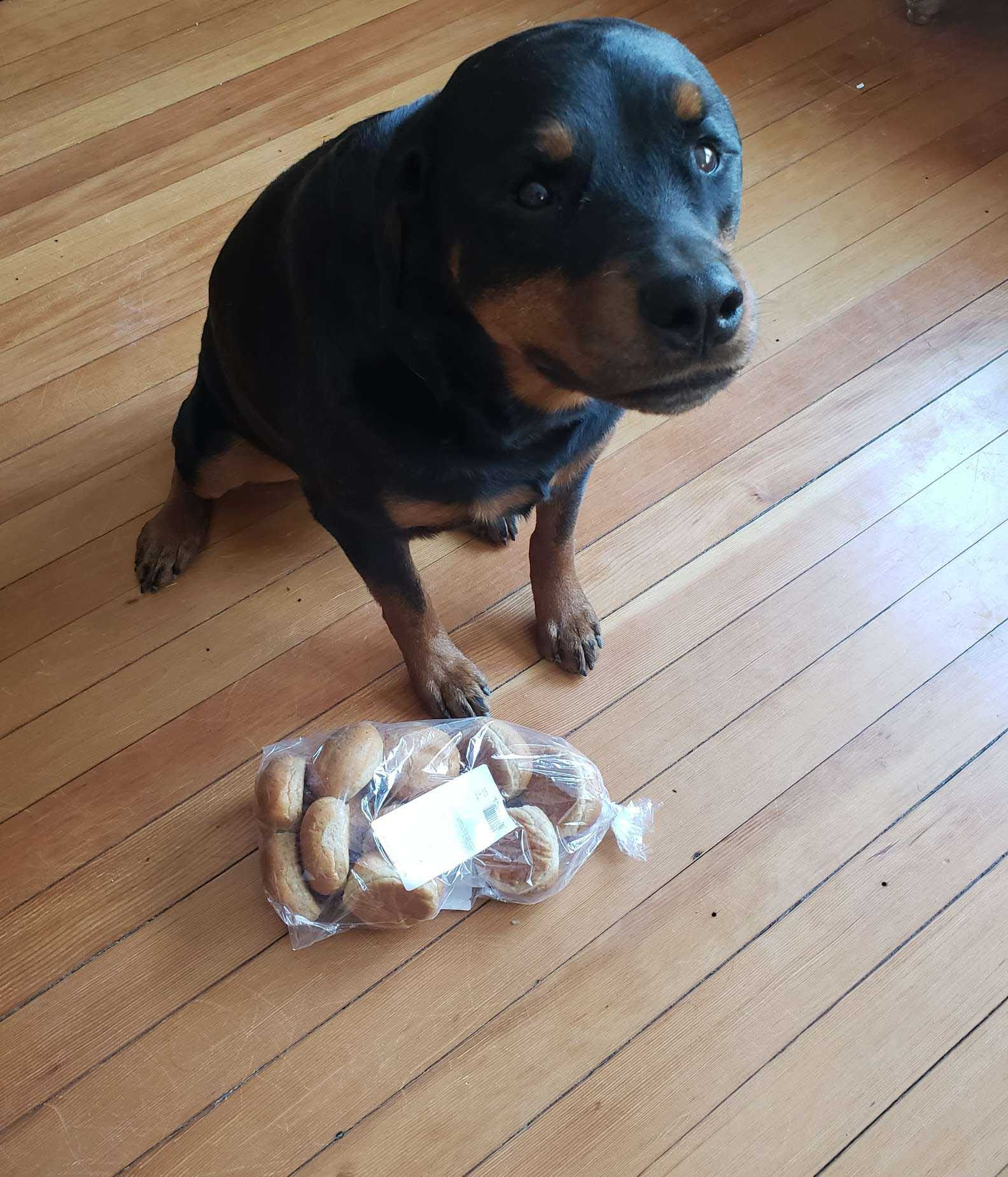 Cachorro fiel coleta pães