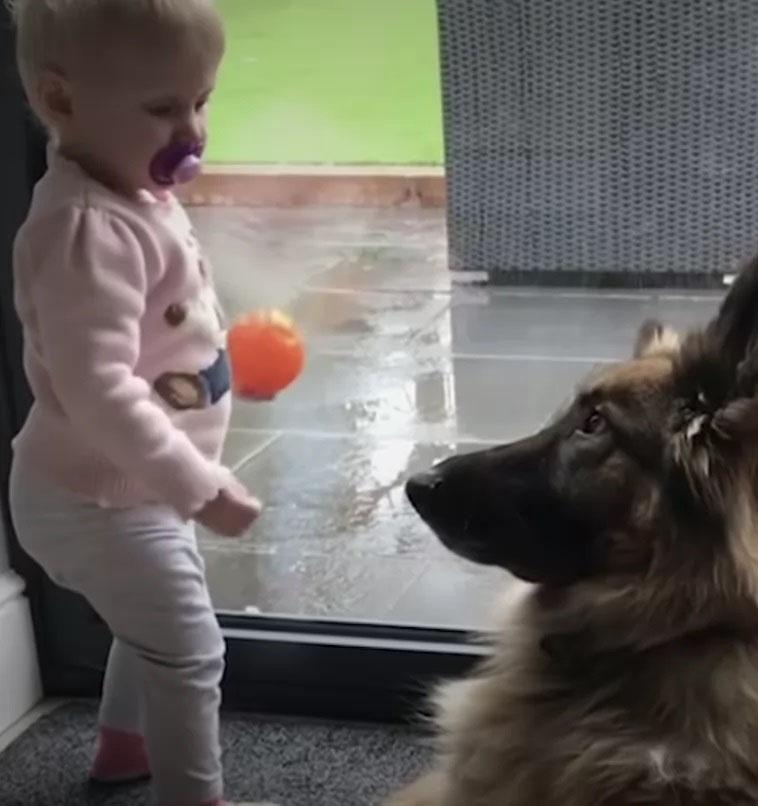 Cachorro grande e garotinha