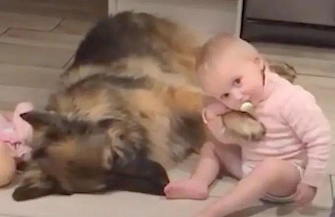 Cachorro grande se torna o guardião