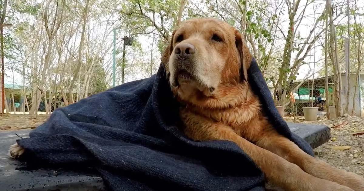 Cachorro reprodutor foi abandonado pelo dono