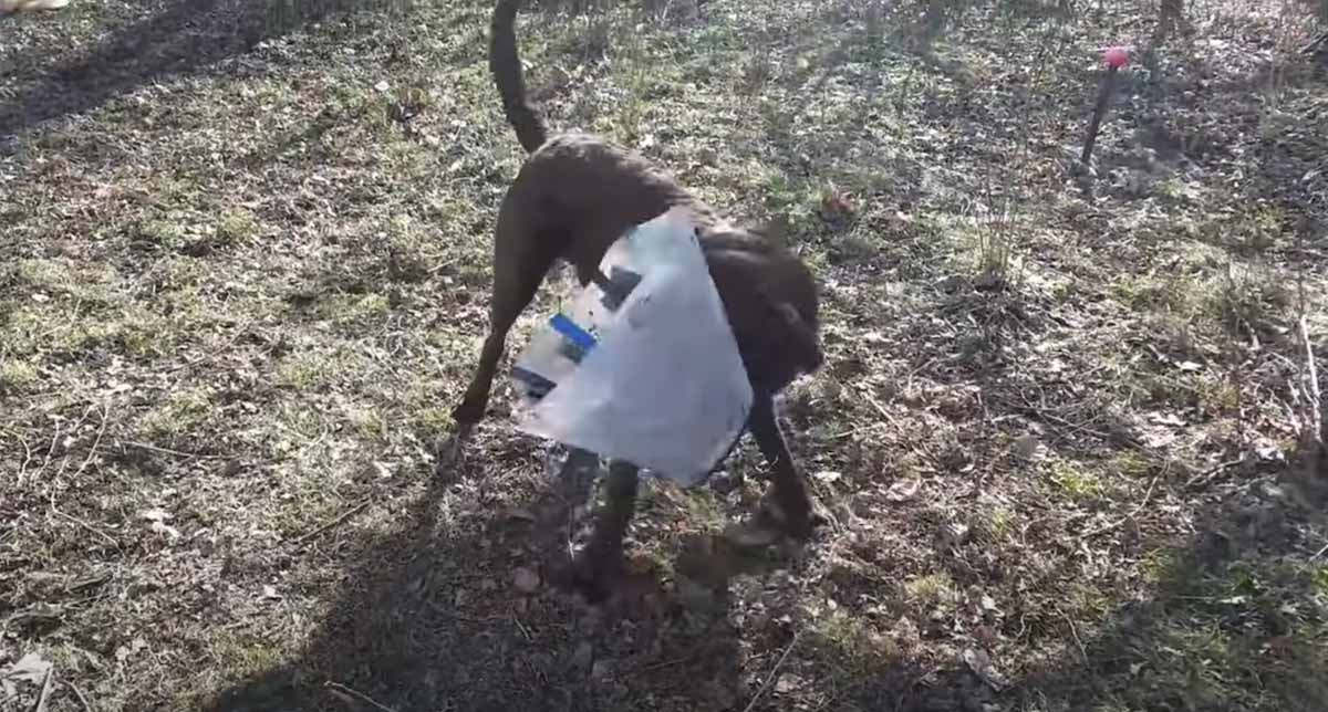 Cachorro se vinga de cone da vergonha