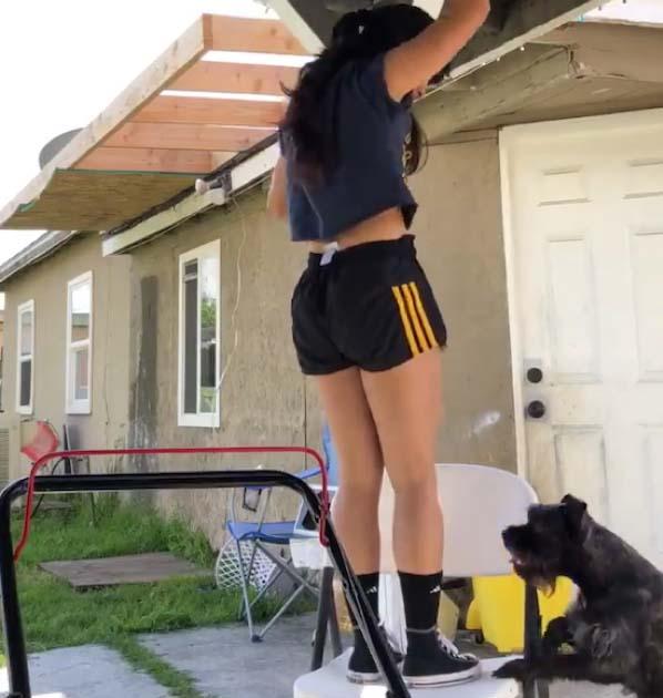 Cachorro vê dona pendurada fazendo exercícios