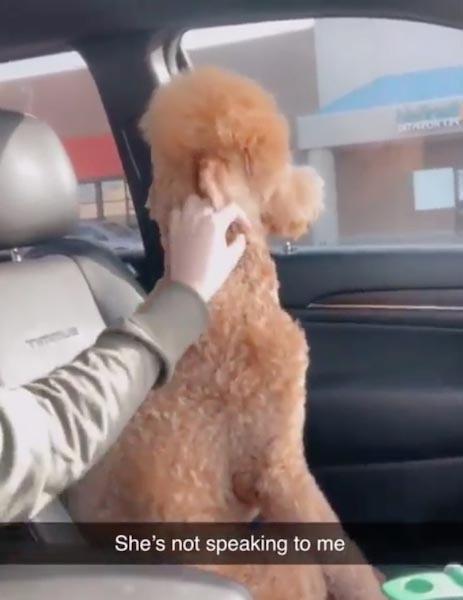 Cachorro vira as costas à dona