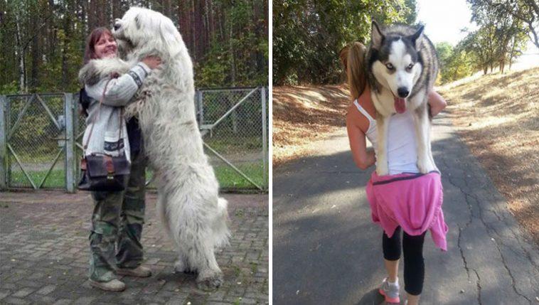 Cachorros gigantes que