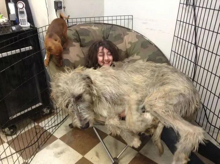 Cachorros gigantes que acham ser pequenos