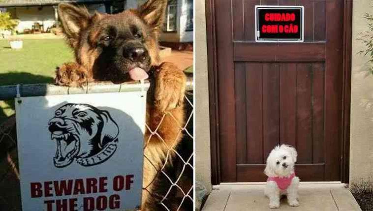 Cachorros nada perigosos