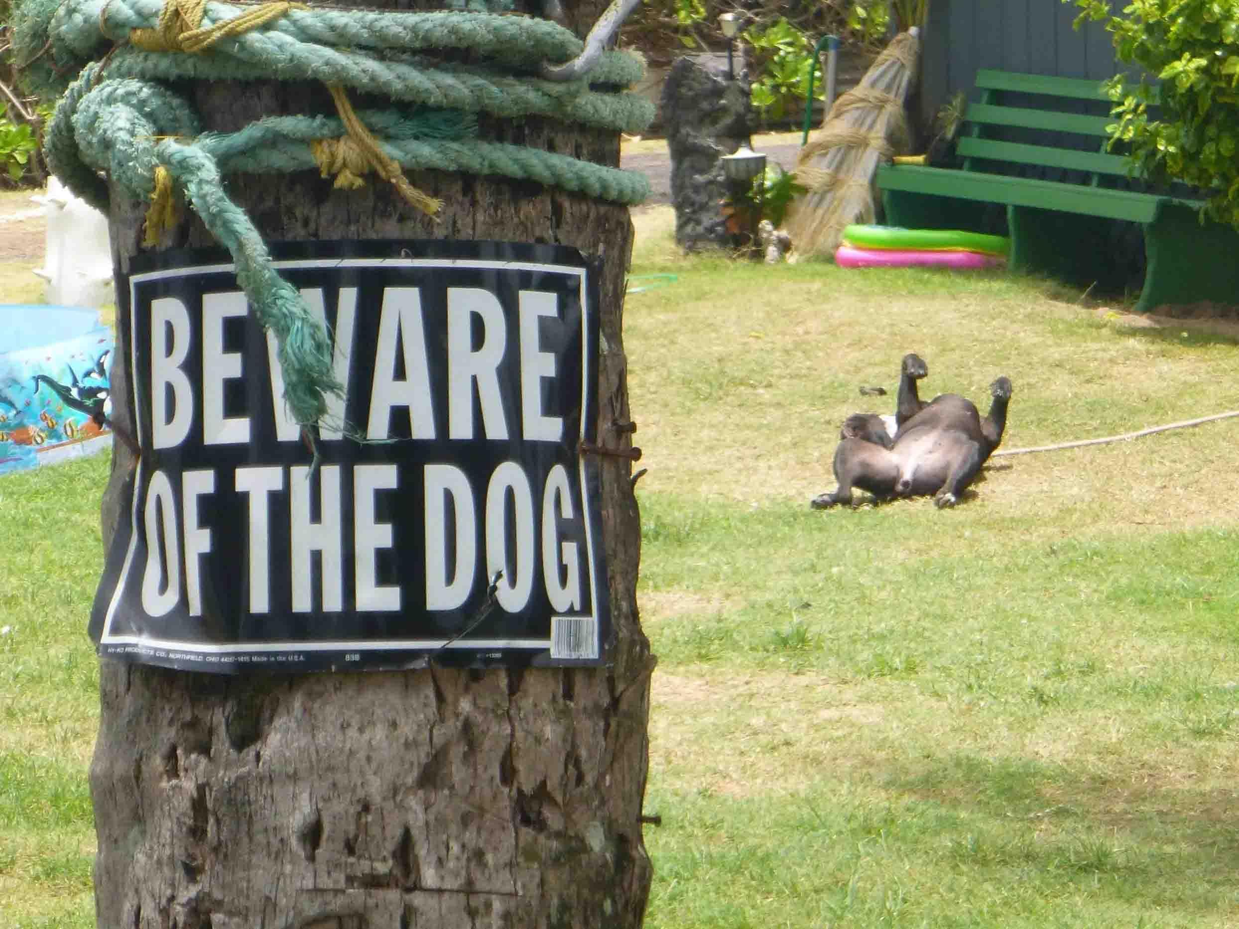 Cachorros nada perigosos fofos