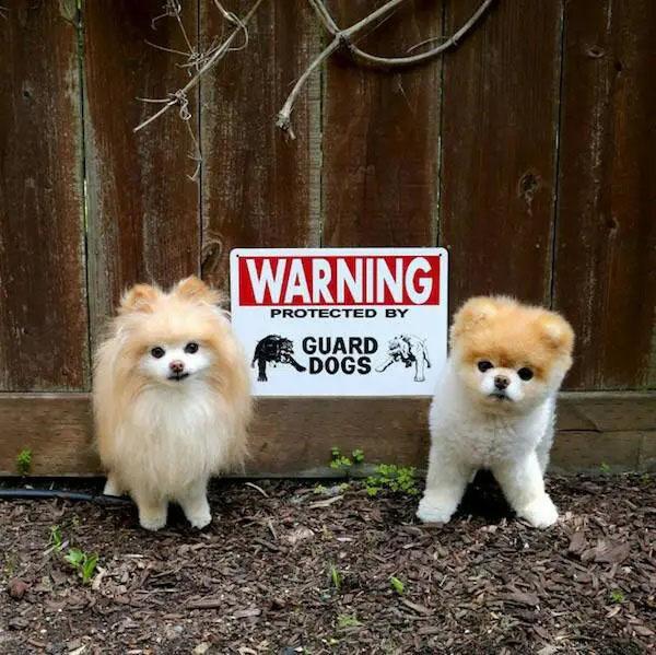 Cachorros nada perigosos lindos
