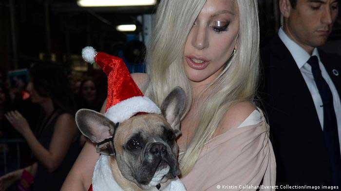 Cachorros roubados Lady Gaga