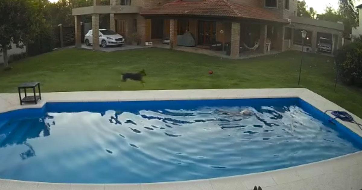 caiu na piscina e foi salva