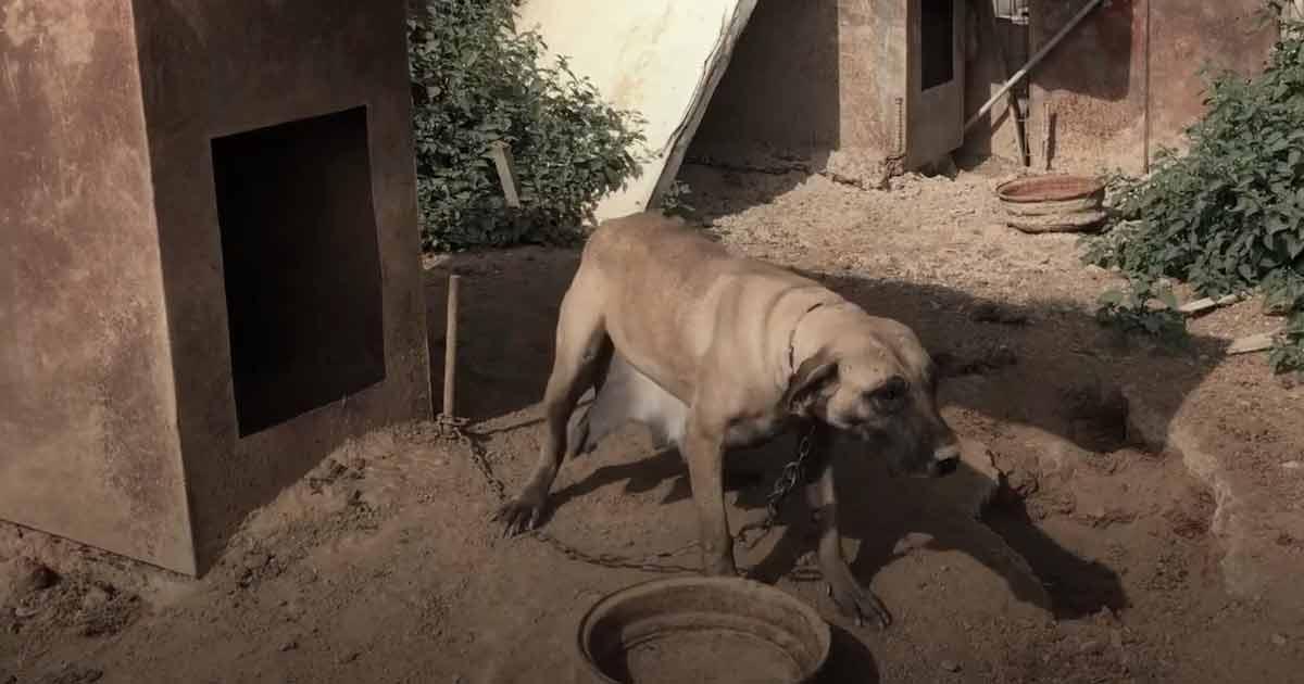 Cadela-passou-a-vida-presa