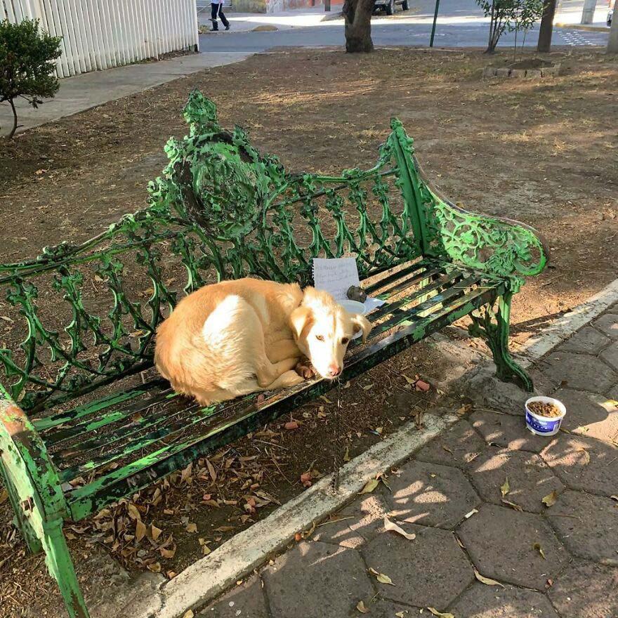 Criança deixa cachorro em banco em praça