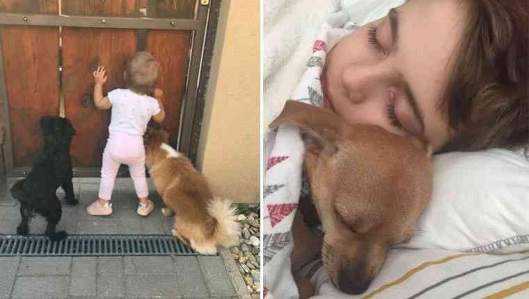 Crianças e cachorros são grandes amigos