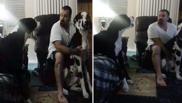 Dogue alemão gigante mimado tem ataque de ciúmes hilário
