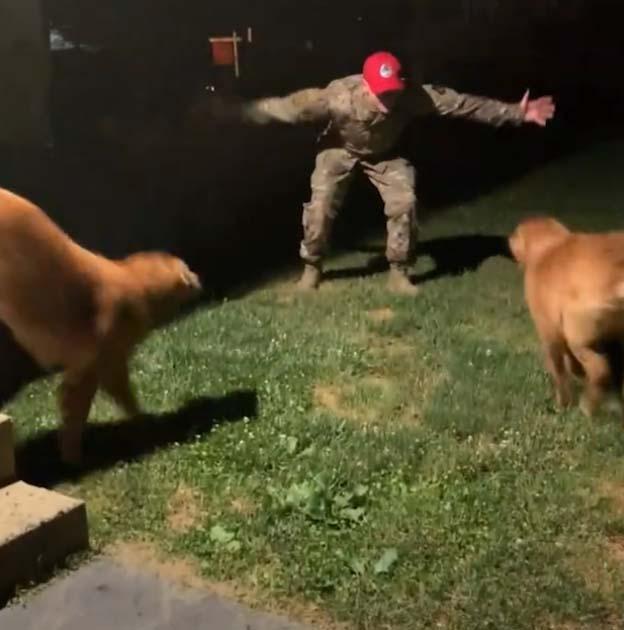 Dono soldado surpreende cachorros