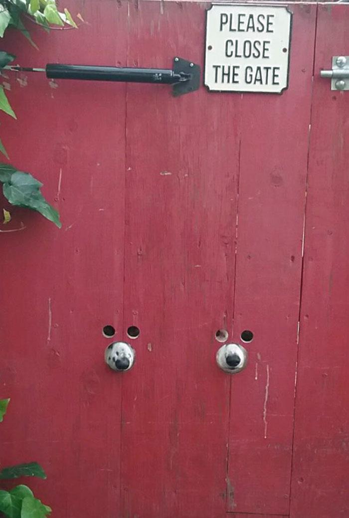 Esses cachorros enfiaram engraçado