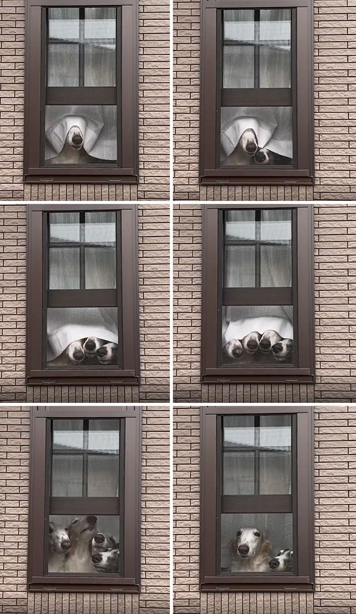 Esses cachorros enfiaram narizes