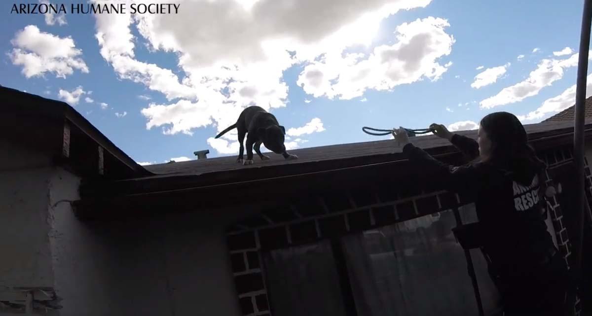 Homem escuta barulho no telhado
