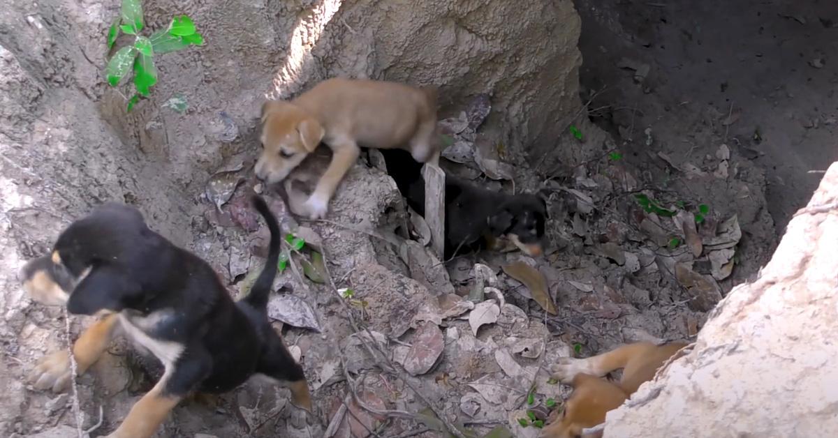 Homem resgatou cachorrinhos na floresta