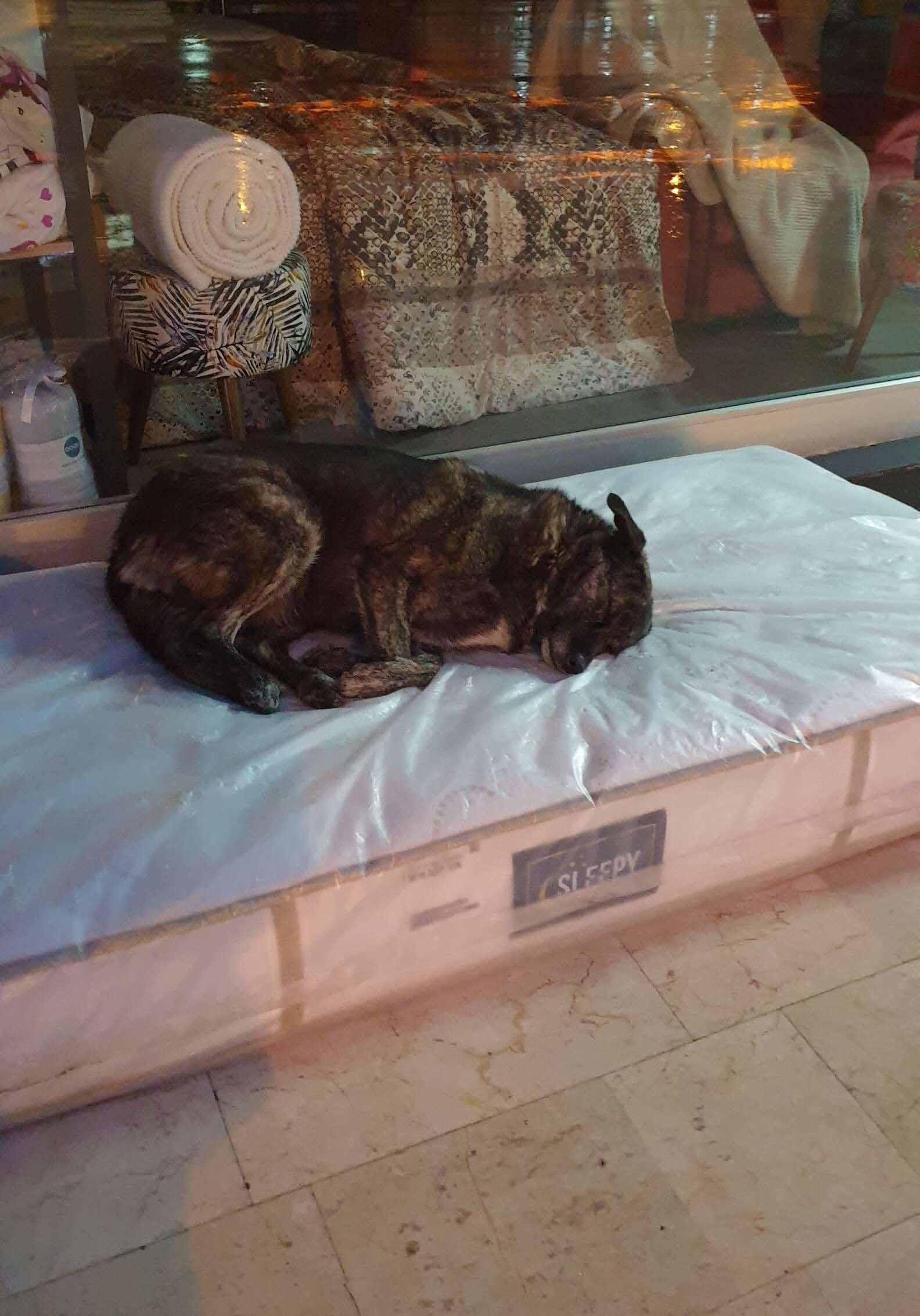 Loja de móveis disponibiliza colchões cachorros