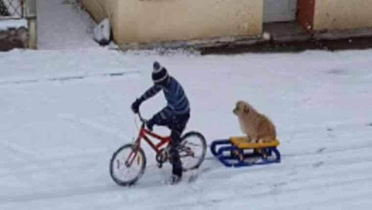 Menino leva cachorro para passear