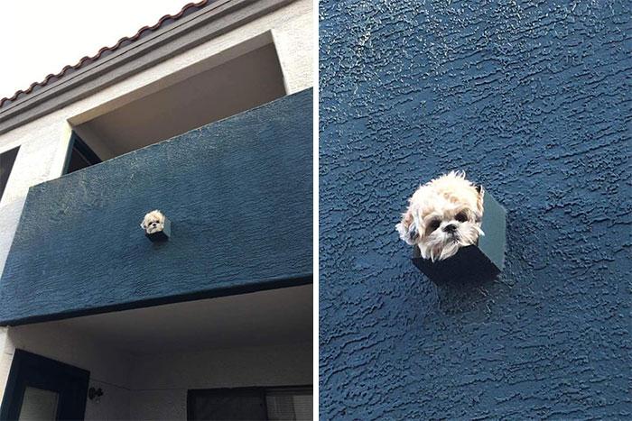 Os cachorros mais intrometidos imagens