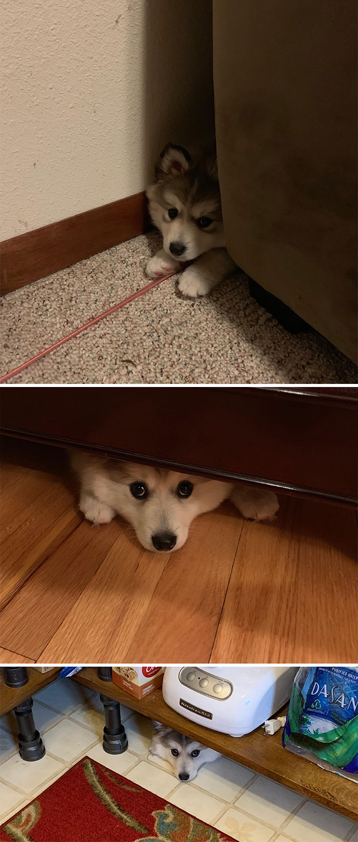 Os cachorros mais intrometidos internet