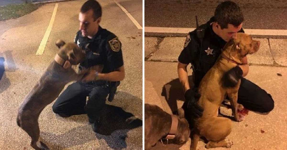 Policiais consolam cachorros