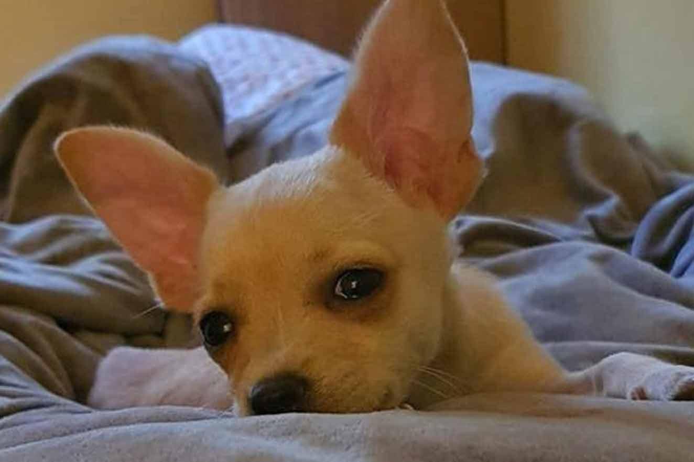 cachorrinho inocente