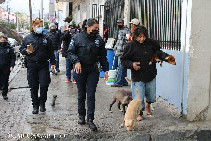 abrigo para animais cachorros