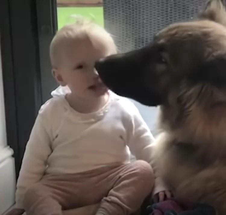 amizade menina e cachorro