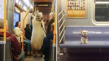 Esses animais se comportam melhor em viagens do que pessoas