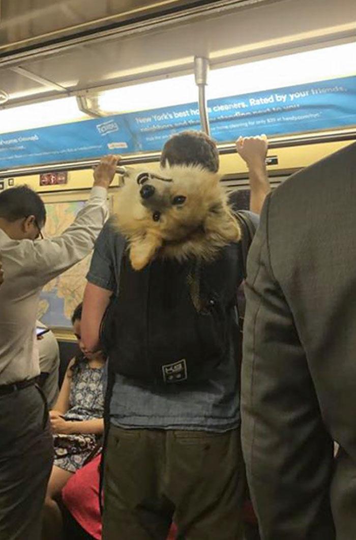 animais se comportam na mochila