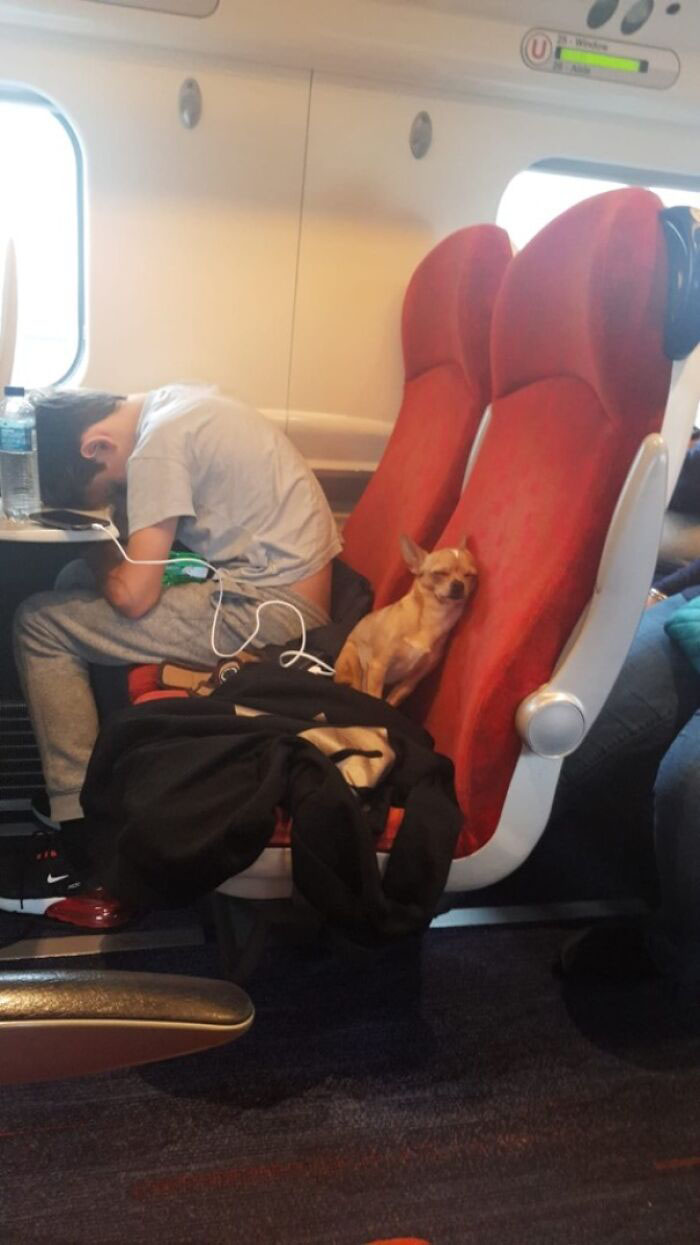 animais se comportam viajando
