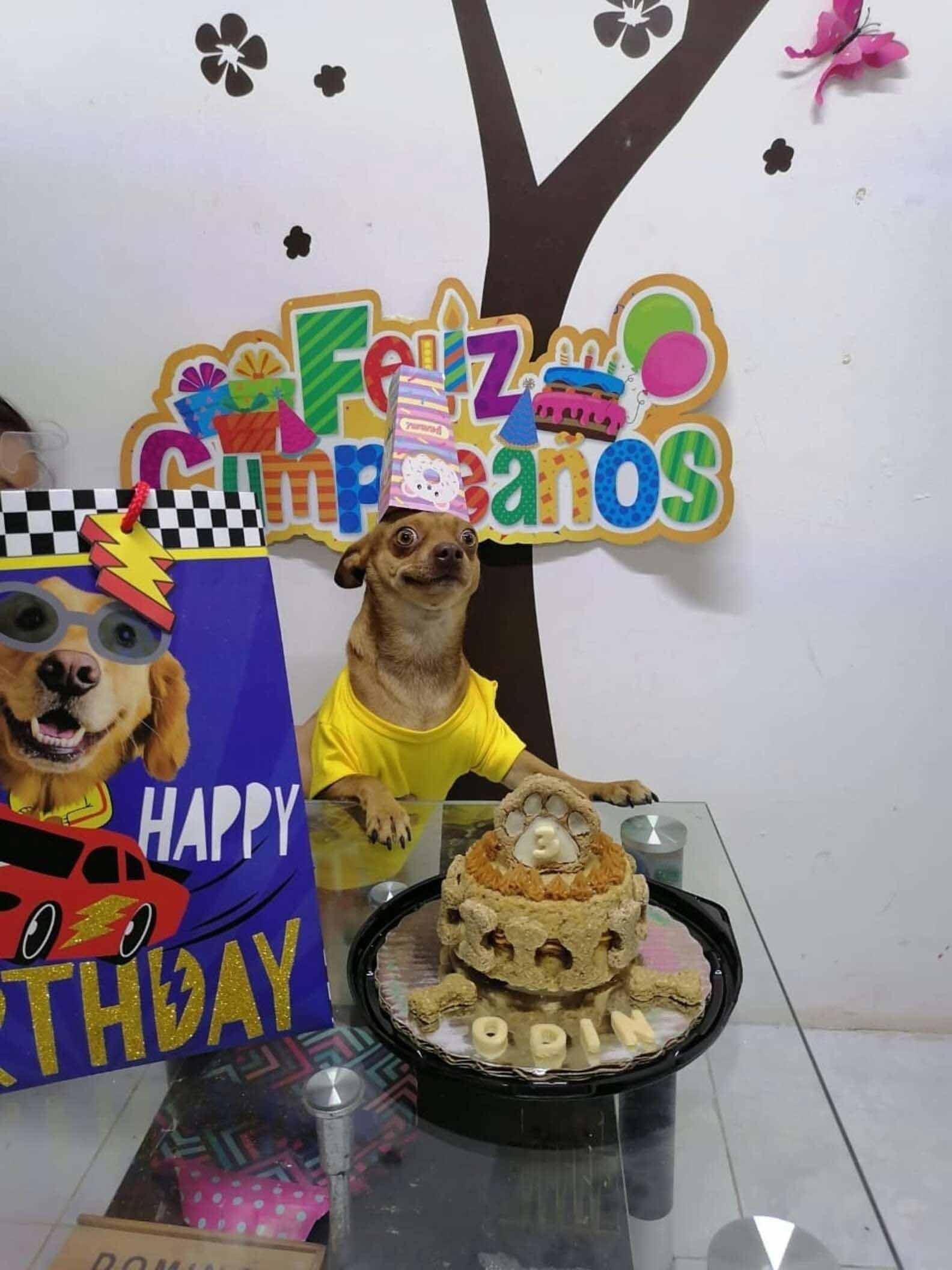 aniversário-de-cachorro