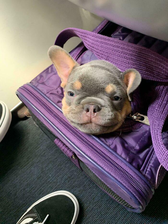 cachorrinho na mochila