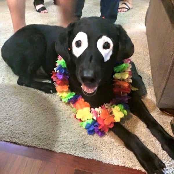 cachorro-com-vitiligo-imagens