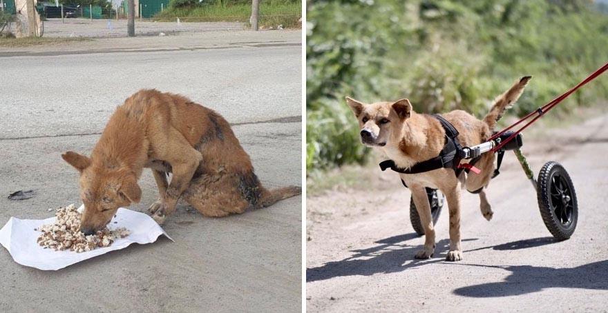 cachorro deficiente