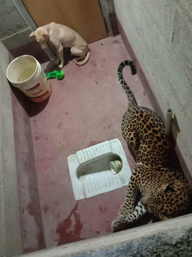 cachorro e leopardo banheiro